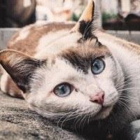 Quelle est la signification du ronronnement du chat ?