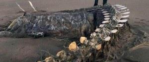 Un gigantesque squelette découvert, baleine ou monstre...