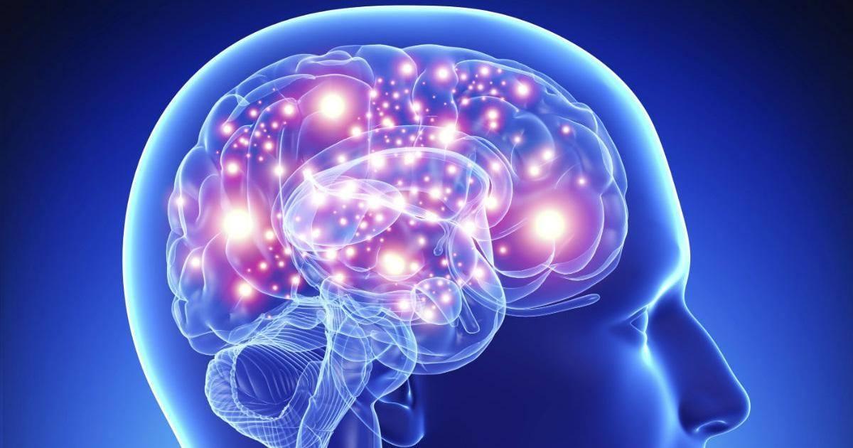 La taille de votre cerveau n'a rien à voir avec votre QI