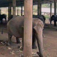 Eléphants à touriste